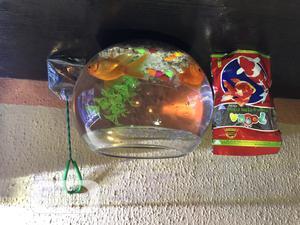 Bowl Aquarium | Fish for sale in Lagos State, Amuwo-Odofin