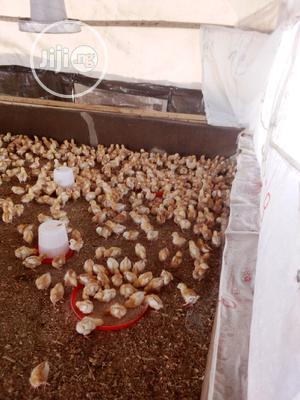 Day Old Chicks | Livestock & Poultry for sale in Oyo State, Ibadan