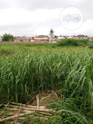 Three Plots Of Lands In Akala Express On The Main Road Expressway | Land & Plots For Sale for sale in Oyo State, Ibadan