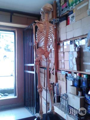 Human Skeleton Medium Size | Medical Supplies & Equipment for sale in Rivers State, Port-Harcourt