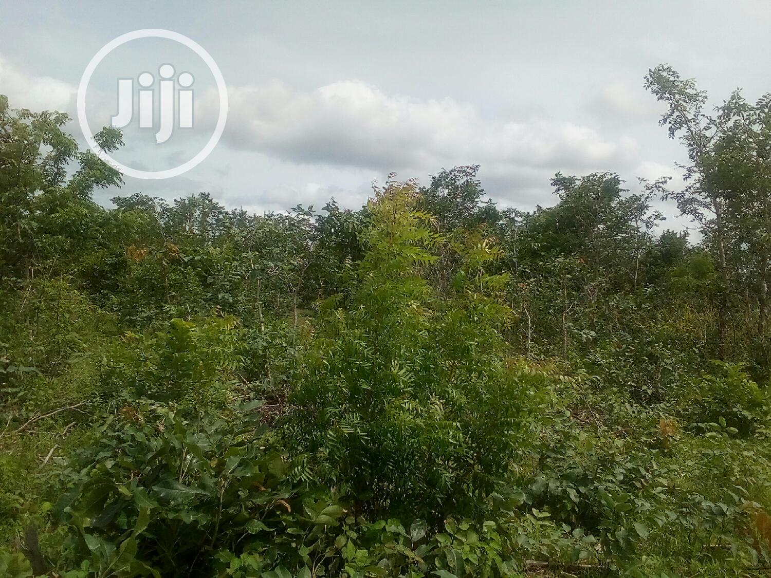 Archive: Plots Of Land For Sale