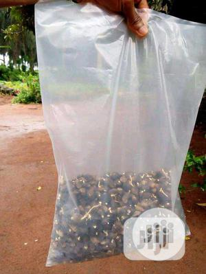Treated Tenera Palm Sprouted Seeds   Feeds, Supplements & Seeds for sale in Edo State, Benin City