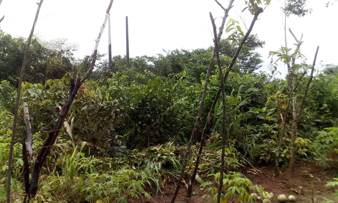 Multipurpose 2ha Of Land For Sale High Brow Area Of Abuja | Land & Plots For Sale for sale in Kubwa, Abuja (FCT) State, Nigeria