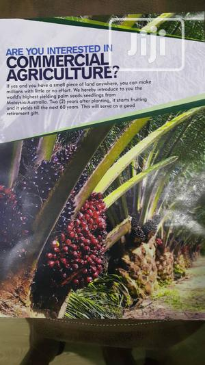Malaysian Palm. 2 Years Fruiting | Landscaping & Gardening Services for sale in Lagos State, Lekki