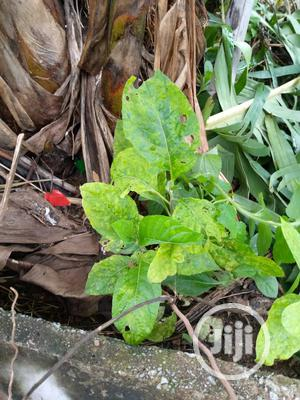 Land And Termites Treatment | Landscaping & Gardening Services for sale in Lagos State, Victoria Island