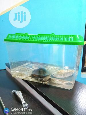 Aquarium+Water Turtle | Reptiles for sale in Lagos State, Ipaja