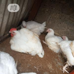 Chicken(Broilers)For Sale | Livestock & Poultry for sale in Rivers State, Etche