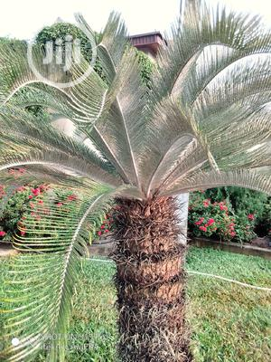 Flower Treatment, Installation, And Maintenance Services | Landscaping & Gardening Services for sale in Lagos State, Ikoyi
