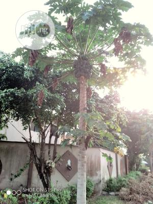 Garden Fruits Installation, Maintenance, And Treatment | Landscaping & Gardening Services for sale in Lagos State, Lekki
