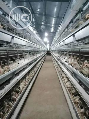 China Factory H Type Automatic Battery Cage Hot Galvanized | Farm Machinery & Equipment for sale in Ogun State, Abeokuta South