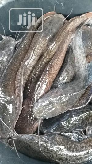 Well Cleaned Catfish For Sale | Livestock & Poultry for sale in Lagos State, Ajah
