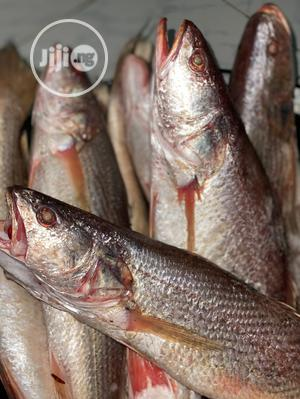 Fresh Sea Croaker Fish   Meals & Drinks for sale in Abuja (FCT) State, Gwarinpa