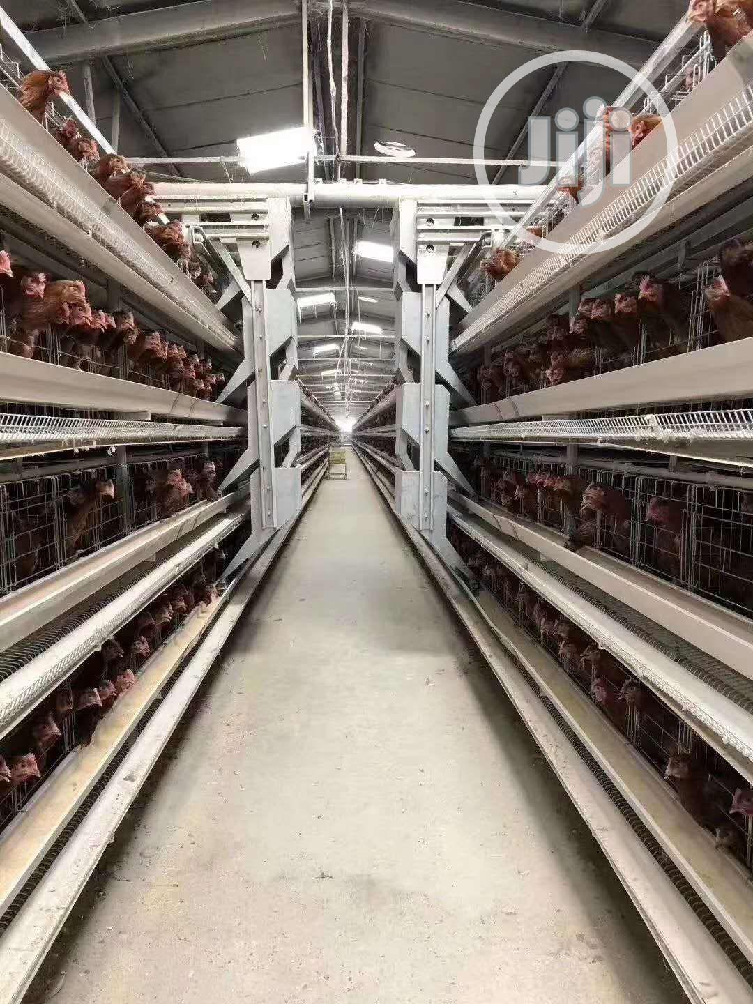 China Factory H Type Automatic Battery Cage Best Quality Cag