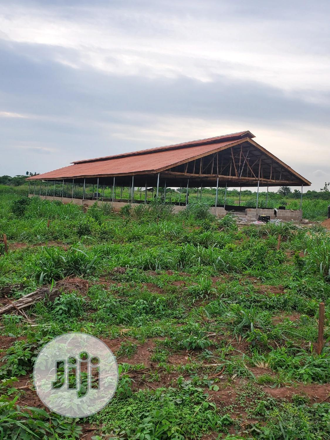 POULTRY Setup Builders And Consultants