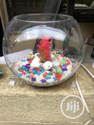 Mini Fish Bowl Aquarium | Fish for sale in Lagos State, Ikorodu