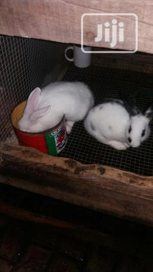 Rabbit Weaners   Livestock & Poultry for sale in Lagos State, Ikorodu