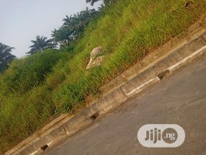 50 Hectares Of Land For Sale | Land & Plots For Sale for sale in Akwa Ibom State, Uyo