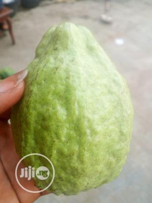 Introducing the Hybrid Jumbo Guava Available for Sale | Feeds, Supplements & Seeds for sale in Ogun State, Obafemi-Owode