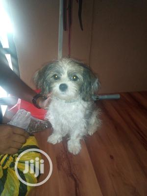 Pet Care Services   Pet Services for sale in Abuja (FCT) State, Gwagwalada
