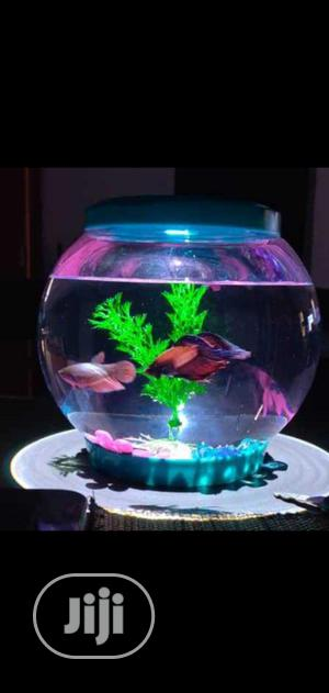 Fish Bowl Kit | Pet's Accessories for sale in Lagos State, Surulere
