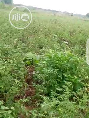 Buy Farmlands at Ihumbo/Oke Odan After Owode Along Idi Iroko   Land & Plots For Sale for sale in Ogun State, Abeokuta South