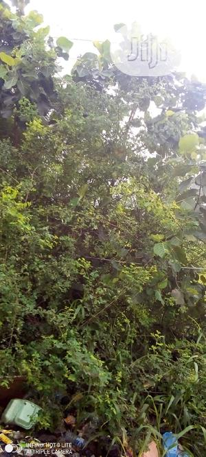 Plot of Land for Sale at Magboro Opp,Mfmlagos Ibadan Express   Land & Plots For Sale for sale in Ogun State, Ifo