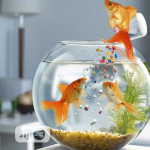 Fish Bowl With Full Kit   Fish for sale in Lagos State, Surulere