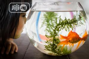 Full Kit Fish Bowl   Pet's Accessories for sale in Lagos State, Surulere
