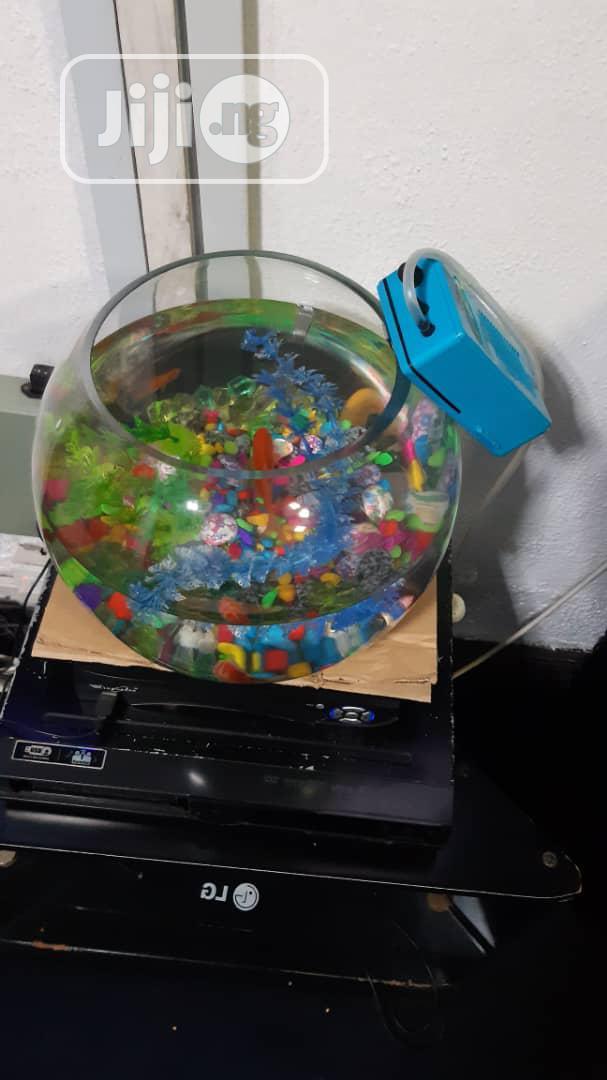Bowl Kit For Your Aquarium Fish