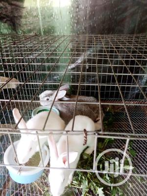 One Fairly Used Rabbit Hutches for Sale   Livestock & Poultry for sale in Edo State, Benin City