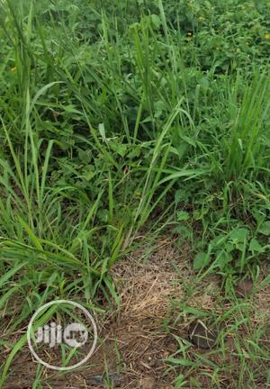 A Plot Of Land For Lease Directly On Ogunusi Rd Ikeja | Land & Plots for Rent for sale in Lagos State, Ikeja