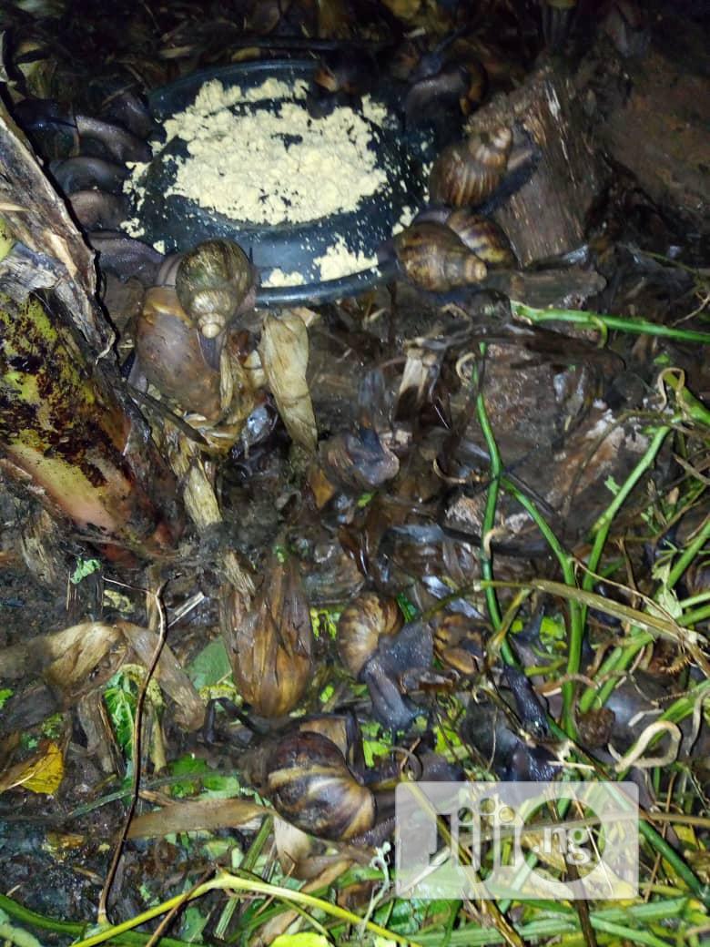Snail For Your Farm
