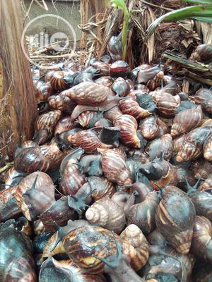 Healthy Snails For Sale | Other Animals for sale in Ogun State, Ado-Odo/Ota
