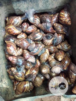 Snails For Sale | Other Animals for sale in Ogun State, Ado-Odo/Ota