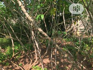 Land for Sale .   Land & Plots For Sale for sale in Edo State, Benin City