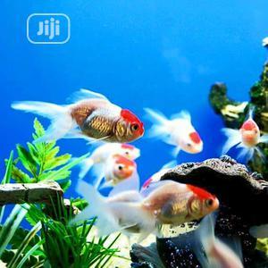 Redcap Fish | Fish for sale in Oyo State, Ibadan
