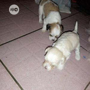 Ella's Kennel, Sale Of Dogs,Walking And Boarding   Pet Services for sale in Abuja (FCT) State, Kubwa