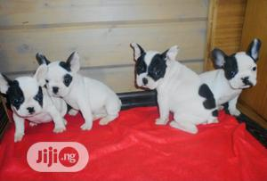 1-3 Month Female Purebred French Bulldog | Dogs & Puppies for sale in Lagos State, Ikoyi