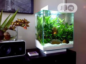 Top Table Aquarium | Fish for sale in Lagos State, Surulere
