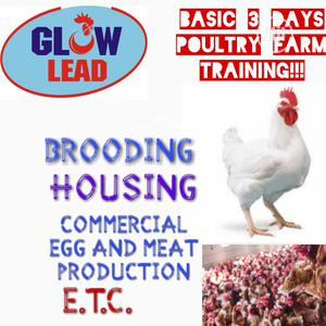 Training On Poultry Farming (Basics) For Starters   Livestock & Poultry for sale in Lagos State, Abule Egba