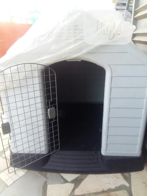Pet Dog In Door House