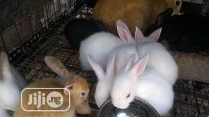 Rabbit Weaners Pet   Livestock & Poultry for sale in Lagos State, Alimosho