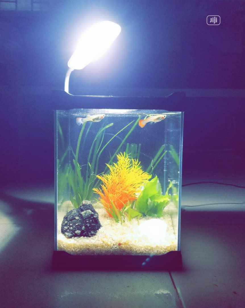 Acrylic Mini Aquarium For Sale