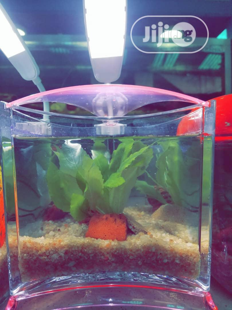 Mini Aquarium For Sale