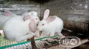 Rabbits For Sale | Livestock & Poultry for sale in Ogun State, Ado-Odo/Ota