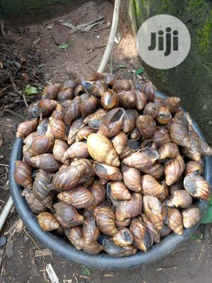 Snails For Your Farm | Other Animals for sale in Ogun State, Ado-Odo/Ota