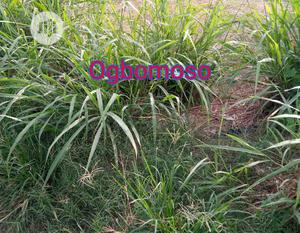 Land For Sale In Ogbomso Oyo State   Land & Plots For Sale for sale in Oyo State, Ogbomosho South