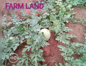 Farm Land For Sale In Umuagwo Ohaji Imo State   Land & Plots For Sale for sale in Imo State, Ohaji/Egbema