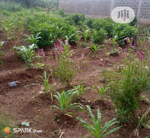Farm Land for Sale at Enugu State   Land & Plots For Sale for sale in Enugu State, Enugu