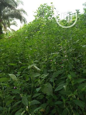 Land in Port Harcourt for Sale | Land & Plots For Sale for sale in Rivers State, Etche